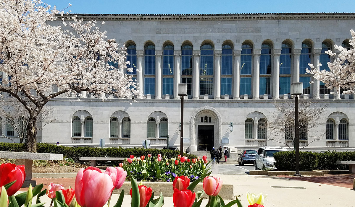 Library during Spring